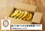 【産地直送便】宮崎・宮崎県産無農薬バナナ「NEXT716」訳アリお徳用詰1kg(8~10本入り)※全国発送
