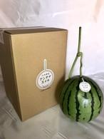 真冬のアンテナスイカ® (2月収穫) 1玉入ギフト箱