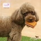 9。Paris Dog【正規輸入】犬 おもちゃ クッキー 音がなる カラフル