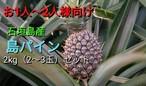 【送料無料】石垣島の島パイン2kg(2〜3玉)