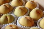 数量限定『朝どり』黄金桃 2kg