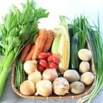 野菜屋 元のファミリー野菜セット