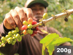 インドネシア |  スマトラ クリンチ ウェットハル | コーヒー豆200g
