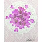 コンパクト押し花 オルラヤレースフラワー(ピンク) 少量をパックにしてお届け! 押し花素材