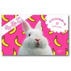 ペット名刺_長方形タイプ_兎とバナナ柄デザイン(1個50枚)_rec_w_001-r