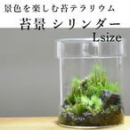 【景色を楽しむ苔テラリウム】苔景シリンダー Lsize
