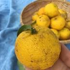無農薬の柚子 1キロ【徳島県産】