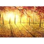 「金色の雨」