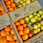 ライム、レモン、キラキラ柑橘★すっぱいセット★ワカヤマフルーツ番外編★6箱のみ追加!