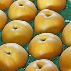 渥美半島産 朝倉なし農園さんの小島梨(幸水)12玉5kg箱
