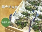 【常温便】龍の子太郎 10個