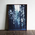 Forest of Giant Sequoia / B2 poster