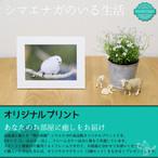 《癒やしの小鳥》シマエナガのオリジナルプリント(はがきサイズ)【送料無料・後払い可】