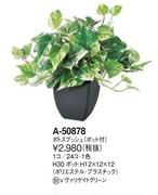 永遠の富の樹 ポトスブッシュ:高さ 30cm