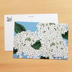 ポストカード 紫陽花 PC23