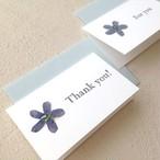 【3枚セット】オキシペタルムの押し花カード