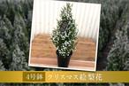 【送料無料】クリスマスエリカー4号鉢ー
