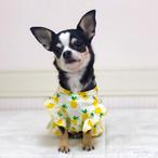【犬服・ドッグウエア】フルーツ柄のサマードレス
