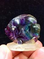 8) フローライト「熱帯魚」