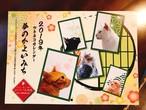 半額!!2019 ツキネコ北海道 壁掛けカレンダー