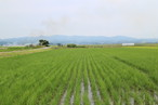 平成29年度 青森県産あきたこまち(無農薬・無化学肥料)白米10キロ