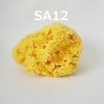 天然の海綿スポンジ SA12