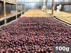 インドネシア |  ジャワ ティピカ ナチュラル | コーヒー豆100g