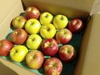 あきた 旬のりんごの詰め合わせ 10kg 家庭用