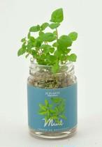 観葉植物|キッチンボトル 【日本製】