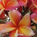 Lurline