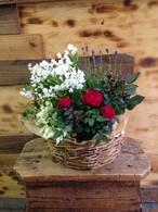 母の日*おまかせ鉢花セット ~ガーデニング好きなお母さんへ