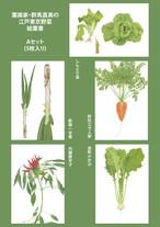 江戸東京野菜ポストカード Aセット