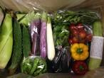 旬野菜の満足セットM