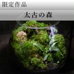 作品名− 太古の森 −【苔テラリウム・現物限定販売】11.10#2