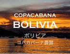 限定・自家焙煎豆「コパカバーナ農園 ボリビア」100g