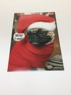 ドイツ直輸入!クリスマスカード  パグ犬サンタさんが可愛い  ポストカード