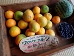 ワカヤマ・フルーツ!希少★国産オレンジ!スイカ!
