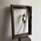 植物を飾る額縁(ドライフラワーの花器・一輪挿し)004