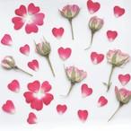 真空パック【60枚】  薔薇つぼみ&ハートの花びらセット