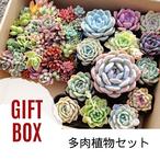 5月から母の日までにお届け▷【ピンクカラーな寄せ植えセット】♢ギフト用綺麗なパッケージ編