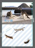 飛び猫A5サイズ クリアファイル