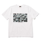"MR.OLIVE×鶴仙園 / ""Ortegocactus macdougallii""PHOTO T-SHIRT"