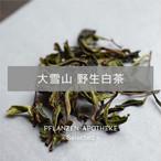 大雪山 野生白茶