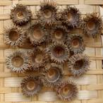 クヌギ・アベマキの殻斗 15個