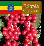 エチオピア・モカ・イルガチェフG1 200g