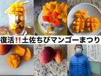 【4箱限定】土佐ちびちびマンゴー9サイズ(12個入り)税込送料込
