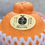 【贈答用】天デコ/不知火/デコポン/3kg/3L〜2L/10〜12玉/熊本県産/冬のギフト