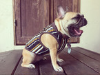 ストライプタンク♡French Bulldog