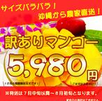 沖縄県産訳ありマンゴー2㎏【5玉~6玉】
