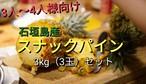 【送料無料】石垣島のスナックパイン3kgセット(3〜4玉)